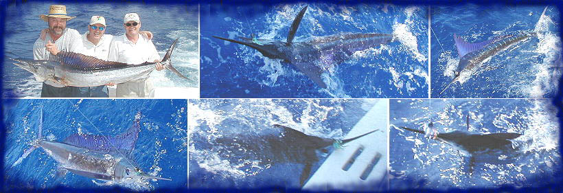 5 striped marlin and a spearfish