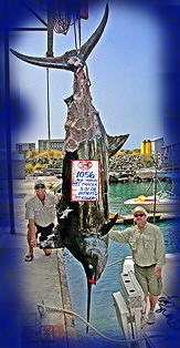1056 lb. blue marlin even with much of it missing due to sharks attacking it