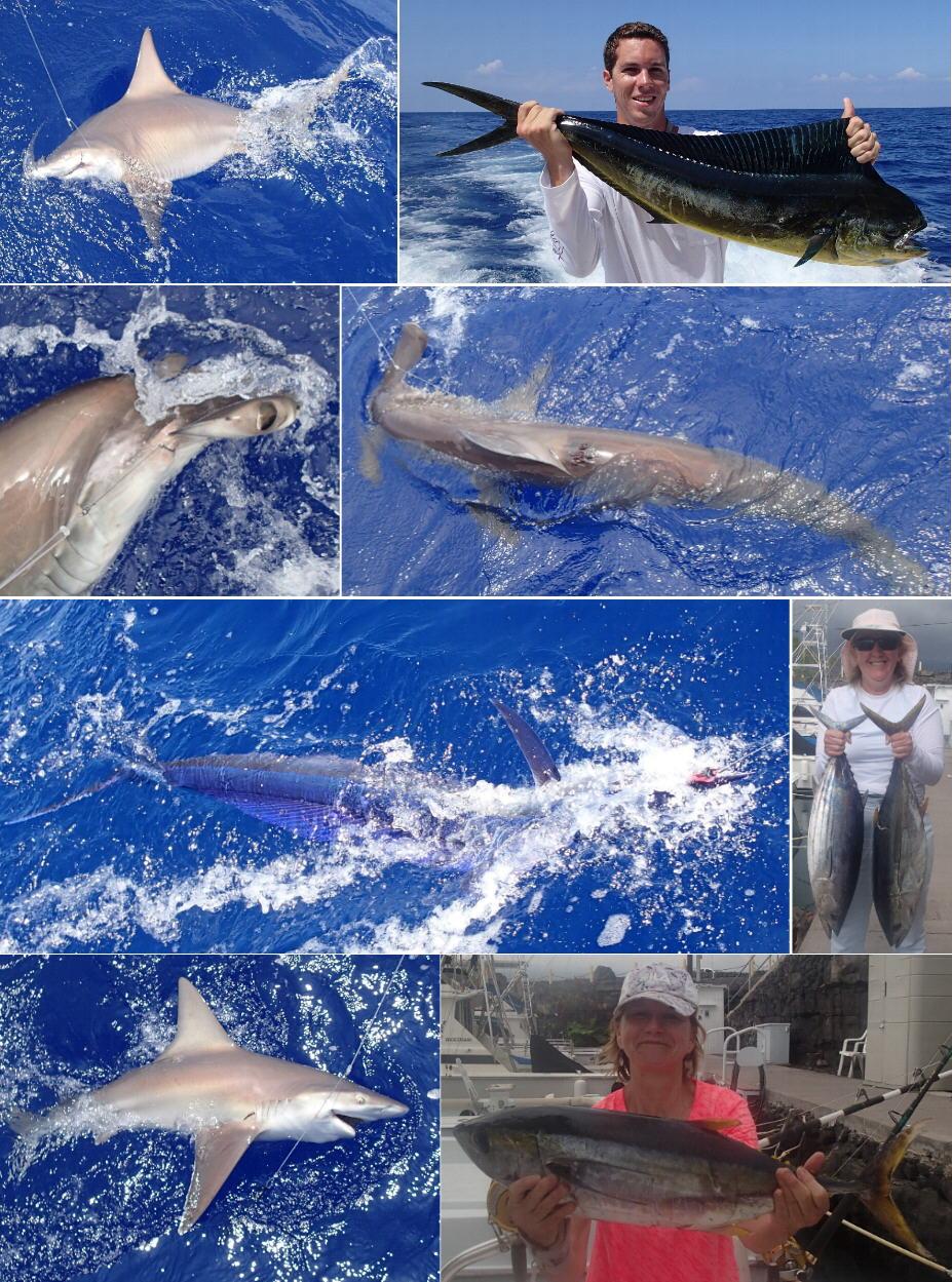 Kona hawaii fishing report may wrap up for Kona hawaii fishing